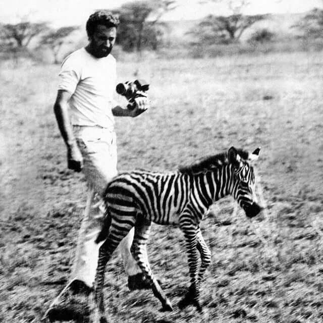 Autohome Tenda da Tetto per auto - Safari Africa